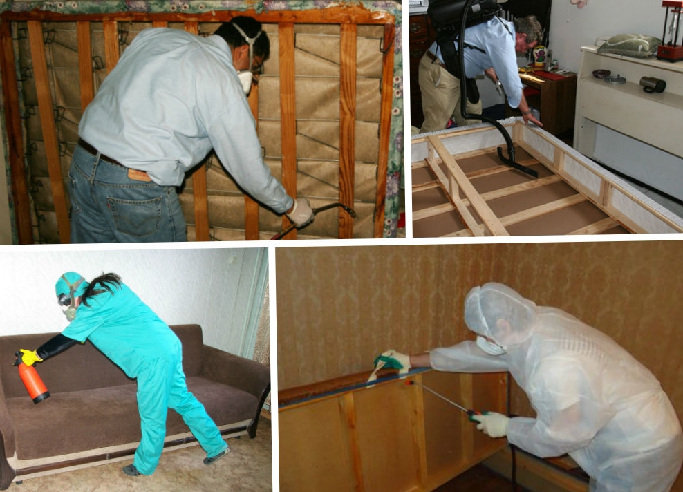 Уничтожать клопов домашних условиях 157