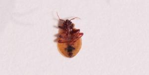 паразиты в организме человека симптомы и диагностика