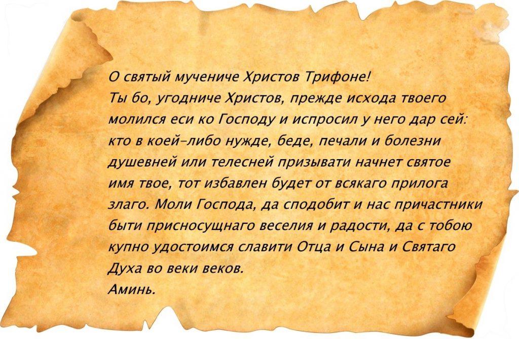 Молитва Трифону Апамейскому
