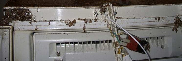 Тараканы в бытовой технике