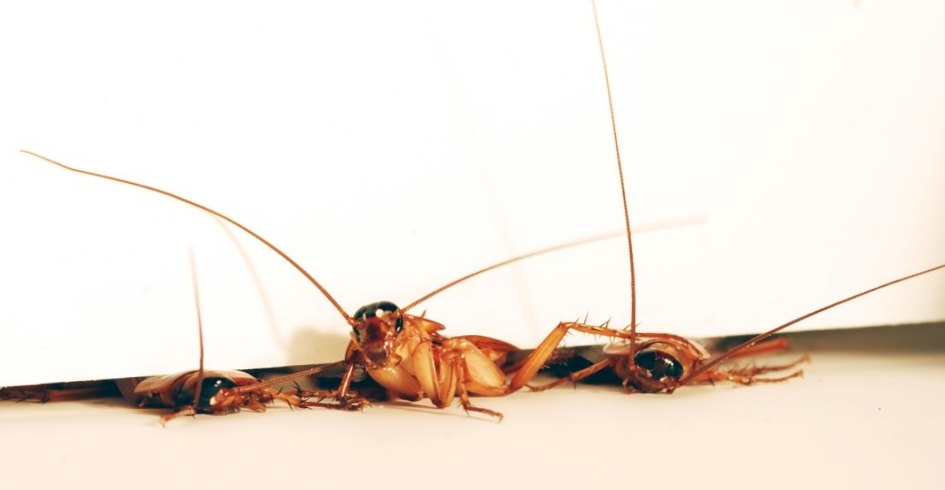 Тараканы ползут из щелей