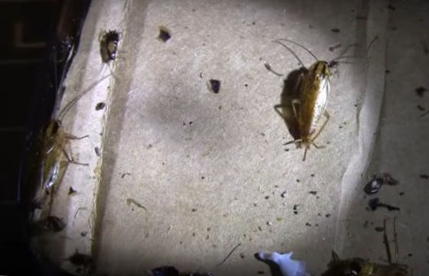 Тараканы ночью