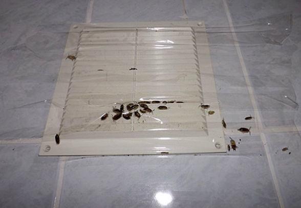 Тараканы в вентиляции