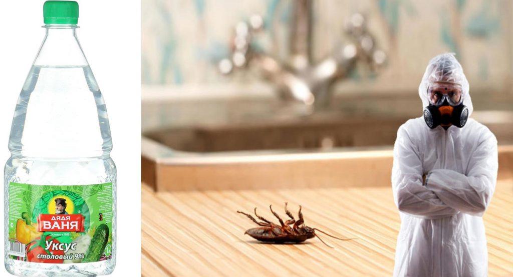 Уксус в борьбе с тараканами