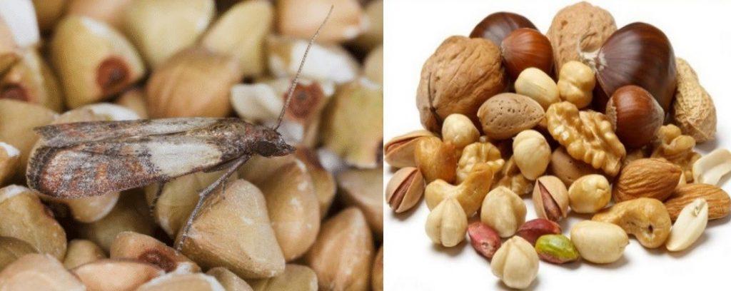 Пищевая моль в орехах